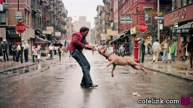 عکسهای برتر هفته از نگاه کافه لینک