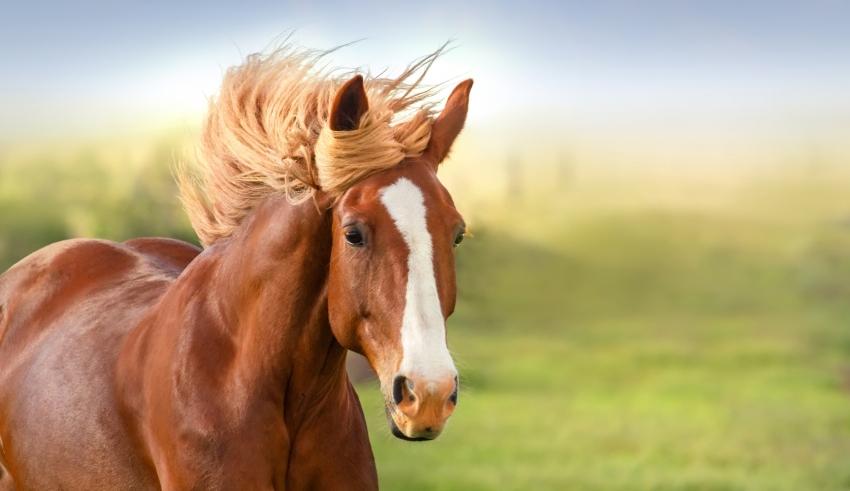 نکاتی در مورد نگهداری و پرورش اسب